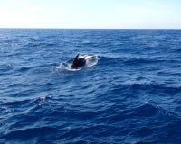 鲸鱼观看在塔里法角的,科斯塔de la卢斯 免版税库存照片