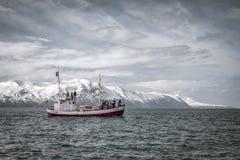 鲸鱼观看的小船春天冰岛 人们为驼背鲸侦察 库存图片