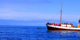 鲸鱼观看的旅行,冰岛7月2017年, 免版税库存图片