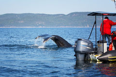 鲸鱼观看的游览 图库摄影