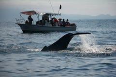鲸鱼观看 库存图片