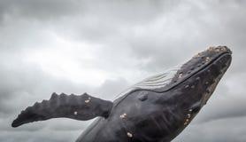 鲸鱼跳出水 库存照片
