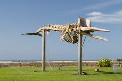 鲸鱼骨骼,费埃特文图拉岛 免版税库存图片