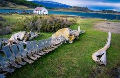鲸鱼骨头 免版税库存照片