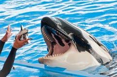 鲸鱼 库存图片