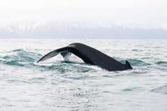 鲸鱼 免版税库存图片