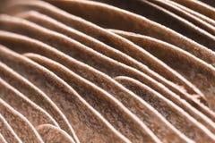 鳃蘑菇 免版税库存图片
