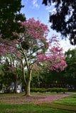 鳄梨树在马尔韦利亚省的马拉加安大路西亚西班牙市区公园 库存图片