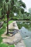 鳄鱼临近水 免版税图库摄影