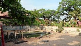 鳄鱼农场在柬埔寨 股票录像