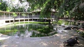 鳄鱼农场在芭达亚,泰国 股票录像