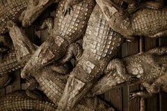 鳄鱼农场 免版税库存图片
