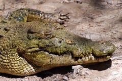 鳄鱼农场 图库摄影