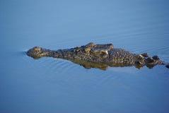 鳄鱼凶眼 库存照片