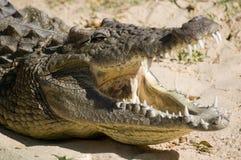 鳄鱼嘴 库存照片