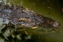 鳄鱼在动物园里 免版税库存图片