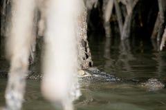 鳄鱼在河 免版税图库摄影