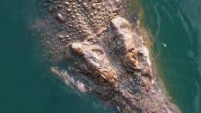 鳄鱼在绿色湿软的水中游泳 泥泞的沼泽的河 泰国 聚会所 股票录像