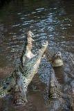 鳄鱼在肯尼亚,非洲的国家公园 免版税图库摄影