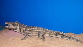 鳄鱼在蜡博物馆的蜡象 免版税库存照片