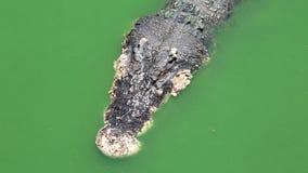 鳄鱼在水中 股票录像