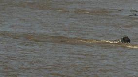鳄鱼在maasai玛拉比赛储备玛拉河不幸地攻击几成人角马 股票视频