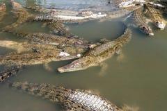 鳄鱼在Oniyama Jigoku旅游胜地的鳄鱼地狱代表各种各样的地狱的一在别府,大分,日本 免版税库存照片