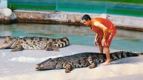 鳄鱼展示 动物训练师和鳄鱼在竞技场 泰国 聚会所 影视素材