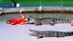 鳄鱼展示 教练员在鳄鱼下颌投入他的头 泰国 聚会所 股票视频
