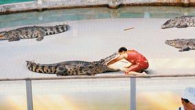 鳄鱼展示 教练员在鳄鱼的嘴投入他的手 泰国 聚会所 影视素材
