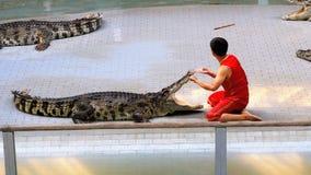 鳄鱼展示 教练员在鳄鱼的嘴投入他的手 泰国 聚会所 股票录像