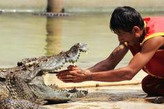 鳄鱼展示  库存照片
