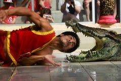 鳄鱼展示 免版税库存图片