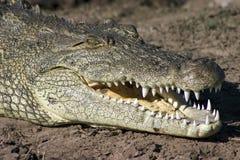 鳄鱼微笑 图库摄影