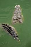 鳄鱼恶魔 库存照片