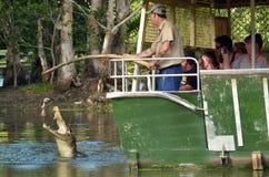 鳄鱼教练员在一条河在阙喂养盐水鳄鱼 库存照片
