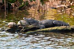 鳄鱼枕头 免版税库存图片