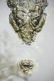 鳄鱼水 免版税库存图片