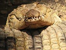 鳄鱼滑稽休眠 免版税库存照片