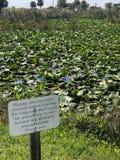 鳄鱼的危险标志在池塘 免版税库存图片