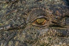 鳄鱼的眼睛在卡卡杜国家公园在Australia& x27;s北方领土 免版税库存照片