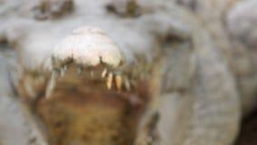 鳄鱼的边,盯梢的头 股票录像