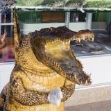 鳄鱼的雕象 库存图片