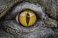 鳄鱼的黄色眼睛 免版税库存图片