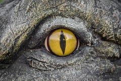 鳄鱼的黄色眼睛 图库摄影