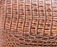 鳄鱼皮肤皮革纹理 免版税库存图片
