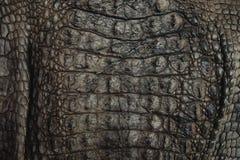 鳄鱼皮革纹理特写镜头背景 免版税库存图片