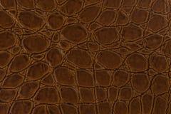 鳄鱼皮革,可能使用作为背景 图库摄影