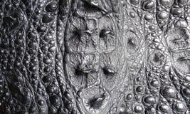鳄鱼皮革 免版税库存照片