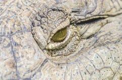 鳄鱼眼睛 库存照片